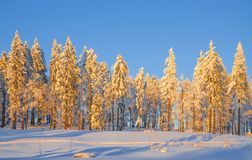 Wintertime in Bavarian Forest,Bavaria,Germany Royalty Free Stock Photography