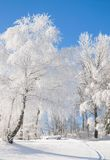 Wintertime in Bavarian Forest,Bavaria,Germany Royalty Free Stock Images