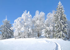Wintertime in Bavarian Forest,Bavaria,Germany Stock Photography