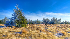 Wintertime in the Black Forest. Nature photo: wintertime in the black forest. After a cold night the frost still hangs in the trees. The sun gradually heats up royalty free stock photos