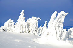 Wintertime,Brocken,Harz Mountains,Germany Stock Image