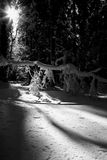 Wintertime (BW). Photo was made in Slovenia in the year 2006 Stock Images