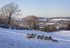 Wintertime в Cotswolds Стоковое Изображение RF