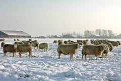 Wintertime in the countryside from Netherlands Stock Images