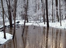Wintertime Creek stock photo