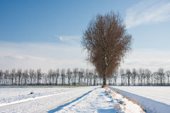 Wintertime in farmland of the Netherlands. Wintertime in the farmland of the Netherlands royalty free stock photo