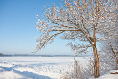 Wintertime in farmland of the Netherlands. Snowy tree in the winterlandscape of the farmland of the Netherlands royalty free stock photo