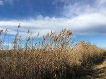 Wintertime field Stock Image