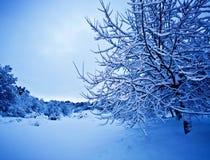 Wintertime landscape Stock Image