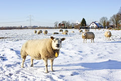 Wintertime in the Netherlands Stock Image