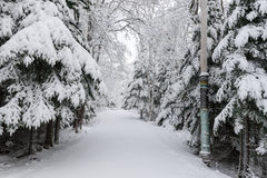 Wintertime in Nova Scotia Stock Photos