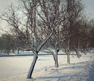 Wintertime in the park Royalty Free Stock Photos