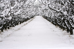 Wintertime Snow. Trees full of snow line a walkway on a cold winter day Stock Image