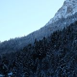 Snowy Alpine Pine Forest Cliffside. Wintertime snow ice covered mountainous alpine pine forest panorama near Schloss Neuschwanstein and Hohenschwangau castles in royalty free stock images