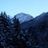 Snowy Alpine Pine Forest Valley. Wintertime snow ice covered mountainous alpine pine forest panorama near Schloss Neuschwanstein and Hohenschwangau castles in stock photo