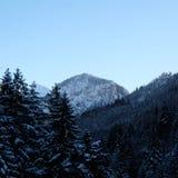 Snowy Alpine Pine Forest Valley. Wintertime snow ice covered mountainous alpine pine forest panorama near Schloss Neuschwanstein and Hohenschwangau castles in stock image