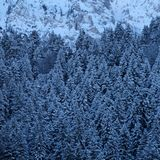 Snowy Mountainous Alpine Pine Forest royalty free stock photography