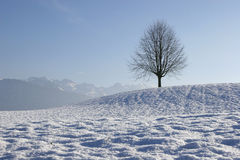 Wintertime in Switzerland. Snowy landscape in the Swiss Alps Royalty Free Stock Photos