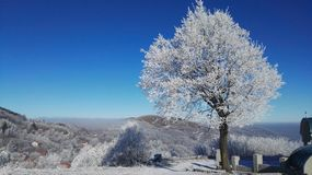 Wintertime. Winter, scenery, tree, sunlight Stock Photos