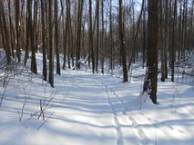Wintertime in the woods. royalty free stock photography