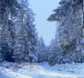 WinterTrail04 Stock Foto