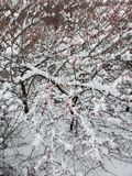 Wintertree стоковое изображение rf