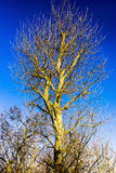Wintertree royalty free stock photos