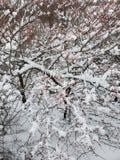 Wintertree royaltyfri bild