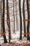 Wintertrees в тумане Стоковое Изображение RF