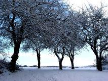 wintertrees Stock Photos