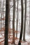 Wintertrees i dimman arkivbild