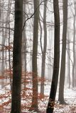 Wintertrees nella nebbia fotografia stock