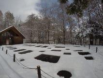 WinterTreesInJapan στοκ εικόνα