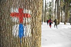 Wintertrekking im Wald Stockbild