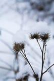 Winterunkraut Lizenzfreies Stockfoto