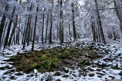 Winterwälder Lizenzfreie Stockbilder
