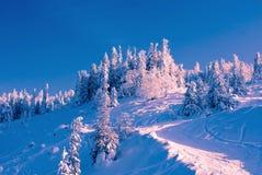Winterwald Lizenzfreies Stockbild