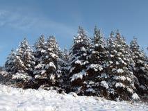 Winterwald Lizenzfreie Stockfotos