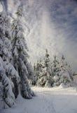 Winterwald Lizenzfreie Stockfotografie