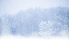 Winterwald 2 Stockfotos