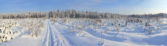 Winterwald Stockfoto