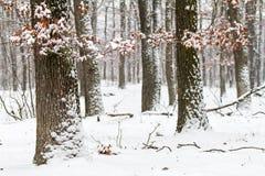 Winterwald Stockbilder