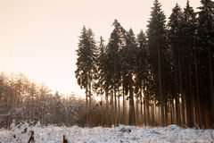 Winterwald Immagini Stock Libere da Diritti