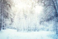 Winterwald Lizenzfreie Stockbilder