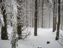 Winterwald Photos libres de droits