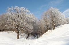 Winterwald Stockfotos