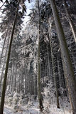 Winterwald Stockfoto