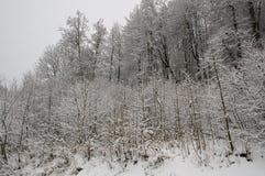 Winterwald bedeckt im Schnee Stockfotos
