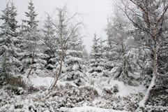 Winterwald bedeckt im Schnee Lizenzfreie Stockbilder