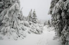 Winterwald bedeckt im Schnee Stockbild